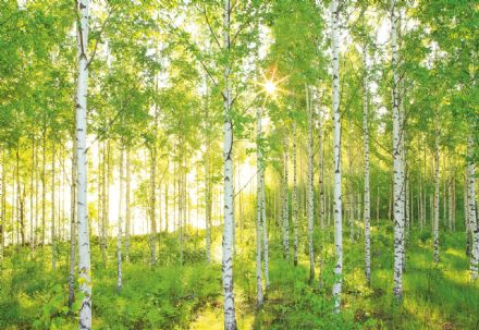 Non-woven Green Summer forest wallpaper